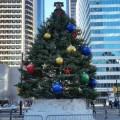 City Hall Holiday Tree