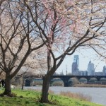 Cherry Blossoms Philly Skyline