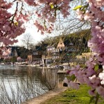 Cherry Blossom overlooking Boathouse Row
